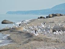 Een zeemeeuwentroep op het strand Stock Foto's