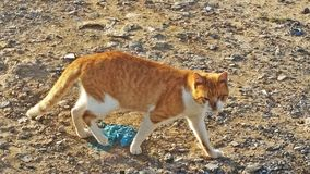 Een zeer leuke kat Stock Afbeelding