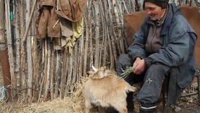 Een zeer oude zieke mens zit op een kruk houdend een geit in zijn handen, het spelen en het voeden stock footage