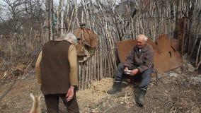 Een zeer oude zieke mens zit op een kruk houdend een geit in zijn handen, het spelen en het voeden stock video