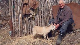 Een zeer oude zieke mens zit op een kruk houdend een geit in zijn handen, het spelen en het voeden stock videobeelden