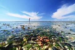 Een Zeester onder Water Stock Afbeelding