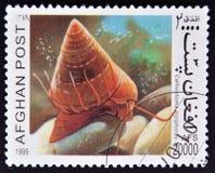 Een zegel die in Afghanistan wordt afgedrukt toont Calliostoma z royalty-vrije stock foto's