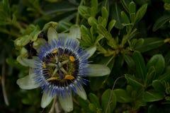 Een zeldzame bloem Stock Foto