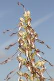 Een zeldzame hircinum van Himantoglossum van de Hagedisorchidee stock foto