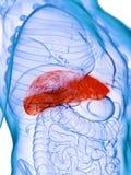 Een zieke lever vector illustratie
