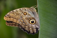 Een Zijglace van een Vlinder Stock Foto's