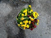 Een zinkemmer kan ook als bloempot worden gebruikt stock foto