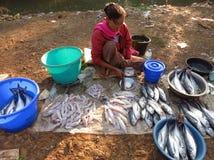Een zitting op de grondvrouw verkoopt vissen in de ochtendmarkt dichtbij de rivier royalty-vrije stock foto's
