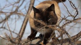 Een zitting van de Kat op een boom stock video