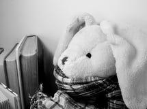 Een zitting van het pluchekonijn onder boeken die een sjaal dragen stock afbeelding