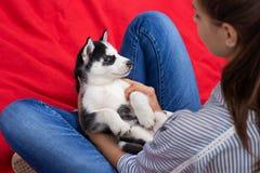 Een zoet schor puppy zit op de overlappingen van een vrouw op het gazon Liefde en zorg voor huisdieren stock afbeeldingen