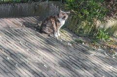 Een zoete kattenzitting op de straat stock afbeeldingen