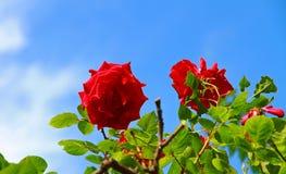 Een zonnig blauw hemel en bloemlandschap Stock Afbeeldingen