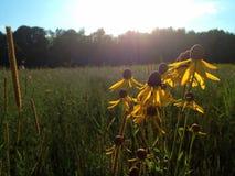 Een zonnige dag Stock Foto