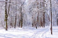 Een zonnige dag in de winter in een park Stock Foto