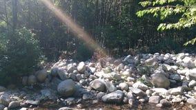 Een zonnige dag in het bos Stock Afbeelding