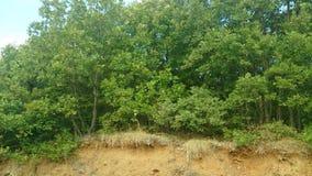 Een zonnige dag in het bos Stock Fotografie