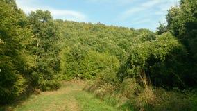 Een zonnige dag in het bos Royalty-vrije Stock Afbeelding