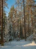 Een Zonnige dag in het Kerstmisbos stock fotografie
