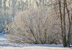 Een zonnige de winterdag Heilige-Petersburg Visserij Stock Foto