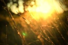 Een zonsondergang in de wildernis Stock Afbeelding