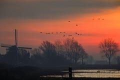 Een zonsopgang in Nederland met een het typische Nederlandse landschap en ganzen opstijgen royalty-vrije stock afbeelding
