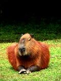 Een zoogdier royalty-vrije stock fotografie