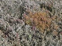 Een zoute weide bij het Noorden Frisian mudflats in de herfst Royalty-vrije Stock Afbeeldingen