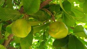 Een zuur fruit dat u kunt maken met kerrie kruiden royalty-vrije stock afbeeldingen