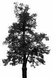 Een zwart boomsilhouet stock illustratie