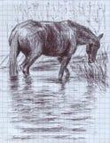 Een zwart paard die knie-zichdiep in de rivier bevinden vector illustratie
