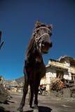 Een zwart paard in een dorp Royalty-vrije Stock Afbeeldingen