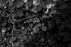 Een zwart-wit abstract patroon van interessante textuur Stock Afbeelding