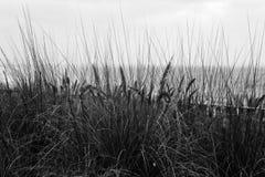 Een zwart-wit beeld van rogge op de achtergrond van de hemel Royalty-vrije Stock Afbeelding