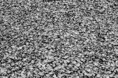 Een zwart-wit patroon van miljoen zeeschelpen Royalty-vrije Stock Afbeelding