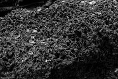 Een zwart-wit patroon van steenachtige textuur Stock Afbeelding