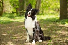 Een zwart-witte hond Royalty-vrije Stock Foto's