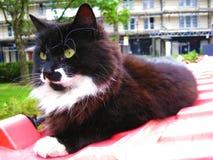 Een zwart-witte kat met gele ogen die op een rode bak in Portobello-Markt in Notting-Heuvel ontspannen royalty-vrije stock fotografie