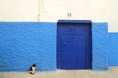 Een zwart-witte kattenzitting door de blauwe deur met blauwe en witte muur stock foto's