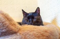 Een zwarte die kat in een mand wordt gezeten Royalty-vrije Stock Fotografie