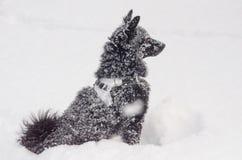 Een zwarte hond in de sneeuw Stock Foto