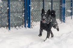 Een zwarte hond in de sneeuw Royalty-vrije Stock Afbeelding