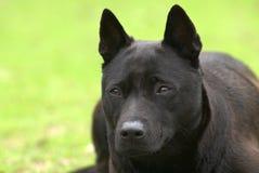 Een zwarte hond legt op de weide stock foto