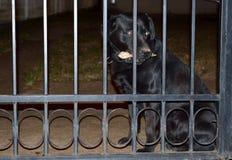 Een zwarte hond met een boom in de mond Stock Foto's