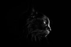Een zwarte kat Stock Foto