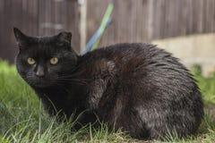 Een zwarte kat Royalty-vrije Stock Foto