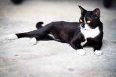 Een zwarte kat stock afbeeldingen