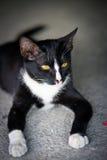 Een zwarte kat stock afbeelding