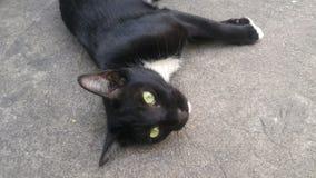 Een zwarte kat dut op de vloer Royalty-vrije Stock Afbeeldingen
